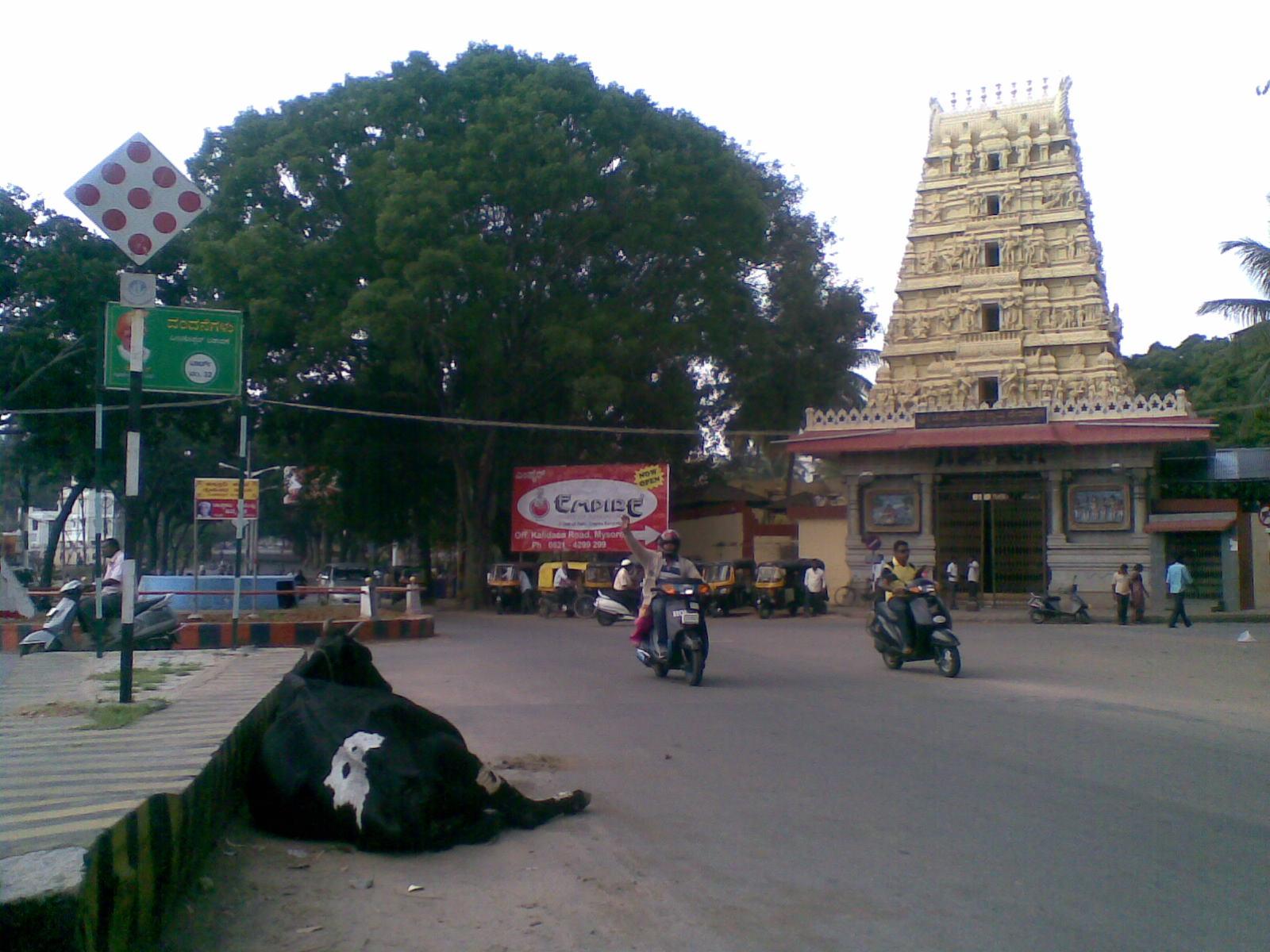 Joga w stylu Mysore